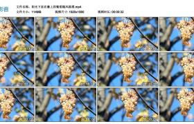 高清实拍视频素材丨阳光下挂在藤上的葡萄随风摇摆