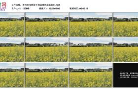 高清实拍视频素材丨春天阳光照射下的金黄色油菜花田