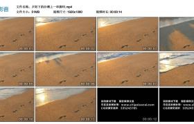 高清实拍视频丨夕阳下的沙滩上一串脚印