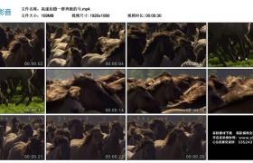 高清实拍视频丨高速拍摄一群奔跑的马