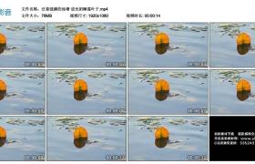 高清实拍视频丨泛着涟漪的池塘 逆光的睡莲叶子
