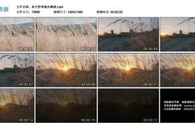 【高清实拍素材】秋天野草随风飘拂