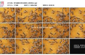 高清实拍视频素材丨特写蜜蜂在黄色的蜂房上爬来爬去