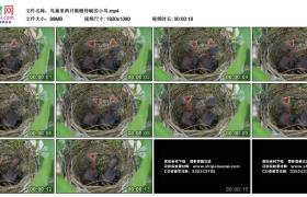 高清实拍视频丨鸟巢里两只嗷嗷待哺的小鸟