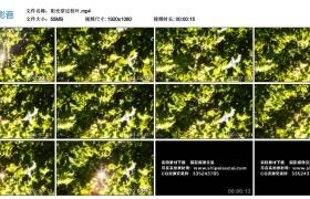 高清实拍视频素材丨阳光穿过枝叶