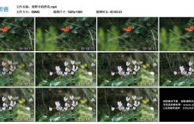 【高清实拍素材】荒野中的野花