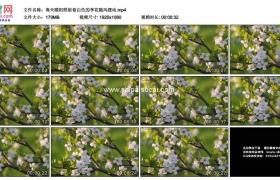 高清实拍视频素材丨春天暖阳照射着白色的李花随风摆动