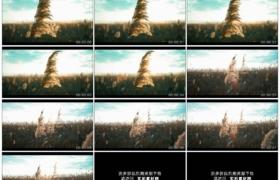 4K实拍视频素材丨特写逆光下芦苇随风摆动