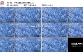 4K实拍视频素材丨冬天雪花覆盖的森林银装素裹