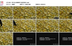 高清实拍视频素材丨特写走过铺满黄叶地面的脚步