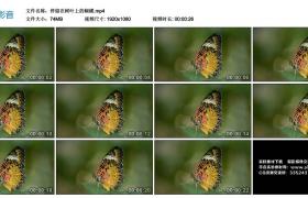 高清实拍视频丨停留在树叶上的蝴蝶