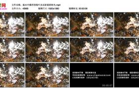 高清实拍视频丨流水中漂浮的落叶及反射着的阳光