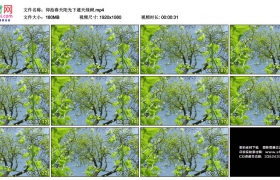 高清实拍视频素材丨仰拍春天阳光下的遮天绿树