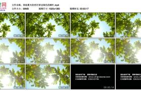 高清实拍视频素材丨仰拍夏天的烈日穿过绿色的树叶