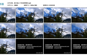 高清实拍视频丨蓝天流云下的老树剪影