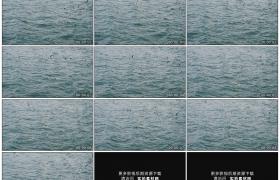 高清实拍视频素材丨海鸥飞翔在波浪翻滚的海面上