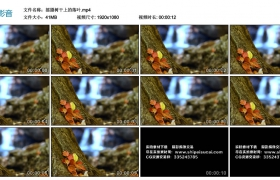 高清实拍视频丨摇摄树干上的落叶