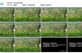 高清实拍视频丨春天的田野