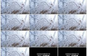 4K实拍视频素材丨冬天树林里挂着雾凇冰挂的树枝