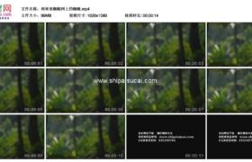 高清实拍视频素材丨树林里蜘蛛网上的蜘蛛