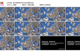 高清实拍视频丨蓝天背景前春天枝头的白色繁花