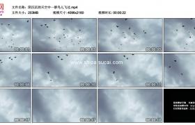 4K实拍视频素材丨阴沉沉的天空中一群鸟儿飞过