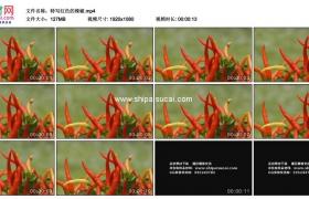 高清实拍视频素材丨特写红色的辣椒