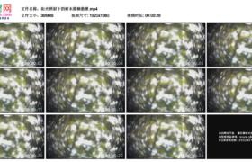 高清实拍视频素材丨阳光照射下的树木模糊散景