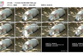 高清实拍视频素材丨一只白色的小狗在晴天树荫下睡觉