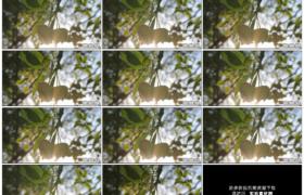 高清实拍视频素材丨特写苹果树枝头挂着的苹果随风摆动