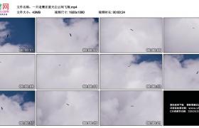 高清实拍视频素材丨一只老鹰在蓝天白云间飞翔