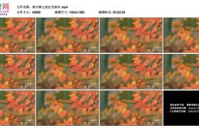 高清实拍视频素材丨秋天树上的红色秋叶