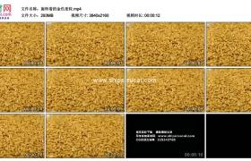 4K实拍视频素材丨旋转着的金色麦粒