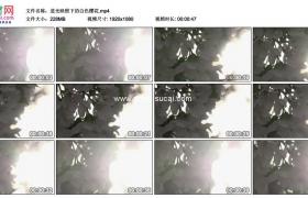 高清实拍视频素材丨逆光映照下的白色樱花