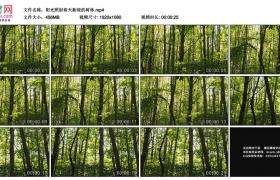 高清实拍视频素材丨阳光照射春天新绿的树林