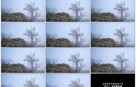 4K实拍视频素材丨冬天山岭上挂着雾凇的树木随风摇摆