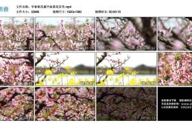 高清实拍视频丨早春桃花盛开油菜花芬芳