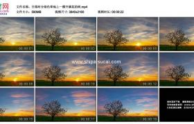 4K实拍视频素材丨日落时分绿色草地上一棵开满花的树