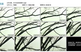 高清实拍视频丨冬天光秃秃的树木