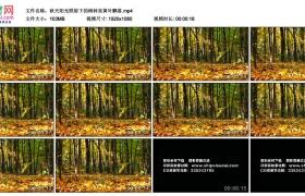 高清实拍视频丨秋天阳光照射下的树林里黄叶飘落