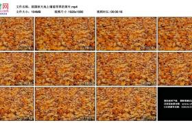 高清实拍视频丨摇摄秋天地上铺着厚厚的黄叶