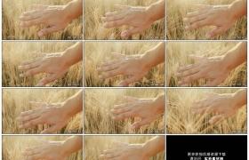 高清实拍视频素材丨特写男子手掌拂过麦田里的麦穗