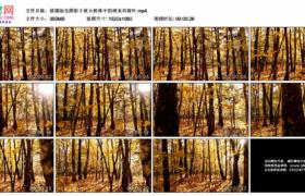 高清实拍视频素材丨移摄阳光照射下秋天树林中的树木和黄叶
