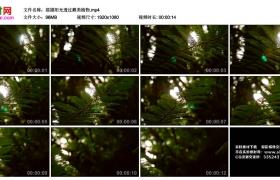 高清实拍视频丨摇摄阳光透过森林里的蕨类植物