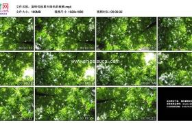 高清实拍视频素材丨旋转仰拍夏天绿色的树叶树梢