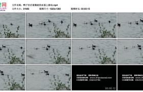 高清实拍视频丨鸭子在泛着微波的水面上游动