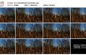 4K实拍视频素材丨秋天夕阳映照着枯草和光秃秃的树木