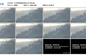 高清实拍视频丨冬天银装素裹的森林白雪飞舞