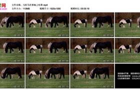 高清实拍视频丨几匹马在草地上吃草