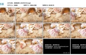 高清实拍视频丨摇摄海滩上的多彩贝壳